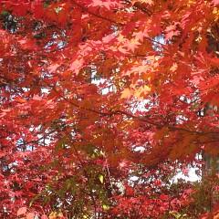 紅葉がきれいきれいの画像