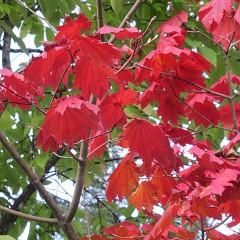 奥飛騨の紅葉の画像