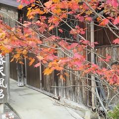 紅葉と笠ヶ岳の雪化粧の画像
