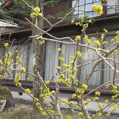 春が来た春が来たどこに来たの画像