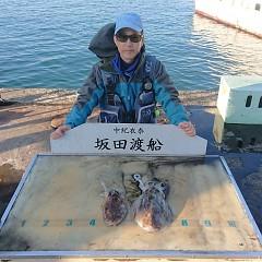文甲イカの画像