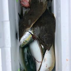 ■9月28日(水)朝便・タテ釣りの写真その9