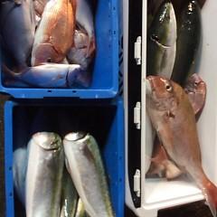 ■9月28日(水)昼便・ウタセ真鯛釣りの写真その7