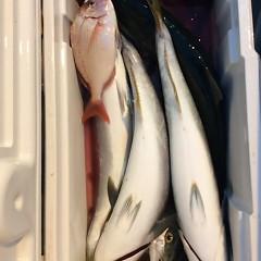 ■9月28日(水)昼便・ウタセ真鯛釣りの写真その11