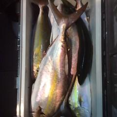 9月30日(金)午後便・ウタセ真鯛釣りの写真その11