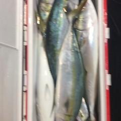 ■10月27日(木)昼便・ウタセ真鯛釣りの写真その10