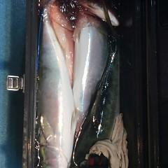 ■10月28日(金)昼便・ウタセ真鯛釣りの写真その7