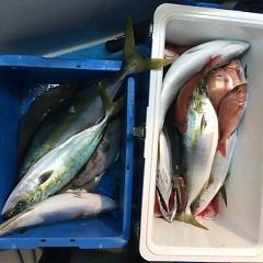 12月2日 (金)  午後便・ウタセ真鯛の写真その4