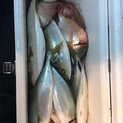 12月3日 (土)  午後便・ウタセ真鯛の写真その5
