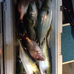 12月3日 (土)  午後便・ウタセ真鯛の写真その6