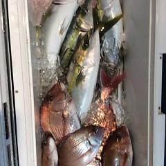 12月3日 (土)  午後便・ウタセ真鯛の写真その8