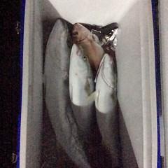 12月3日 (土)  午後便・ウタセ真鯛の写真その9