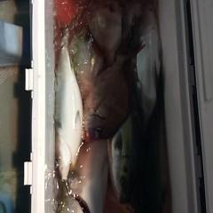 12月17日 (土)  午後便・ウタセ真鯛の写真その7