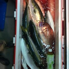 12月18日 (日)  午後便・ウタセ真鯛の写真その12