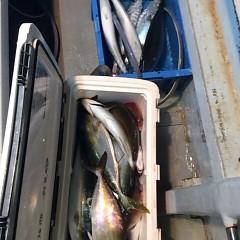 12月20日 (火)  午後便・ウタセ真鯛の写真その4