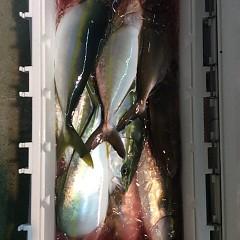 12月20日 (火)  午後便・ウタセ真鯛の写真その5