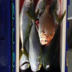 12月20日 (火)  午後便・ウタセ真鯛の写真その7