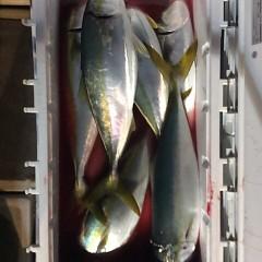 12月20日 (火)  午後便・ウタセ真鯛の写真その8