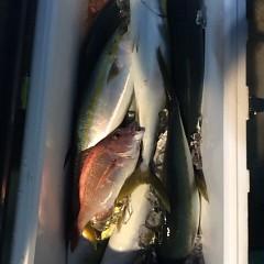 12月21日 (水)  午後便・ウタセ真鯛の写真その5