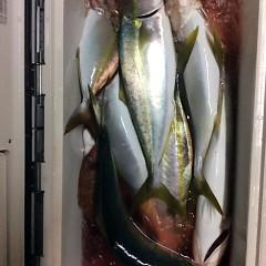 12月21日 (水)  午後便・ウタセ真鯛の写真その7