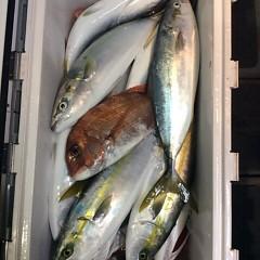 12月21日 (水)  午後便・ウタセ真鯛の写真その8