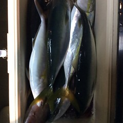 12月21日 (水)  午後便・ウタセ真鯛の写真その10