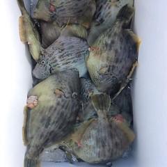 1月10日 (火)   午前便・カワハギ釣りの写真その1