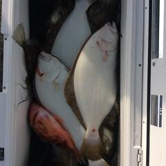 1月13日(金)イワシの泳がせ釣りの写真その4