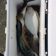 1月15日(日)午前便・ヒラメ・青物釣りの写真その3