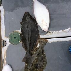 2月1日 (水)午前便・泳がせ釣りの写真その5
