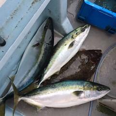 2月22日 (水)1日便・泳がせ釣りの写真その4