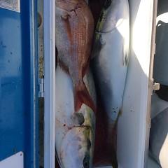 2月24日 (金)1日便・泳がせ釣りの写真その3