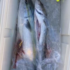 2月24日 (金)1日便・泳がせ釣りの写真その4