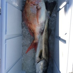 2月24日 (金)1日便・泳がせ釣りの写真その5