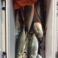2月26日 (日)午後便・アジ釣りの写真その8