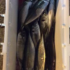 2月26日 (日)午後便・アジ釣りの写真その10
