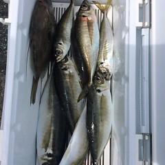 3月25日 (土)午前便・アジ釣りの写真その2