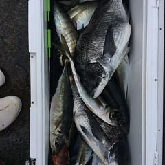 3月31日 (金)午後便・アジ釣りの写真その1
