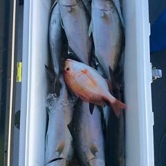 4月23日 (日)午後便・ウタセ真鯛の写真その5
