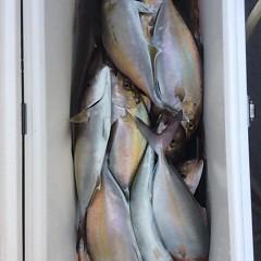 4月24日 (月)午後便・ウタセ真鯛の写真その9