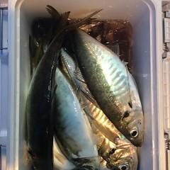 4月28日 (水)午後便・アジ釣りの写真その7