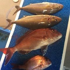 5月7日 (日)午後便・ウタセ真鯛の写真その2
