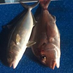 5月7日 (日)午後便・ウタセ真鯛の写真その3