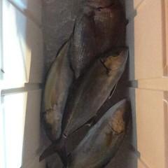 5月8日 (月)午後便・ウタセ真鯛の写真その9