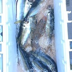 5月20日 (土)午前便・アジ釣り・午後便・真鯛の写真その2