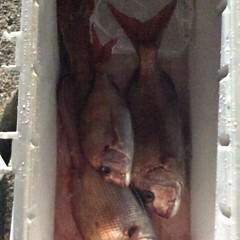 5月20日 (土)午前便・アジ釣り・午後便・真鯛の写真その6