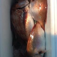 5月26日 (金)午後便・ウタセ真鯛の写真その7