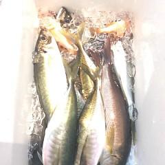 5月31日(水)午前・午後便・アジ・イサキ釣りの写真その6
