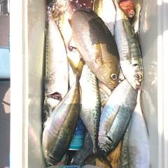 5月31日(水)午前・午後便・アジ・イサキ釣りの写真その7
