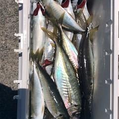 6月12日(月)午前便・アジ・イサキ釣りの写真その2